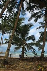 Palm Tree Climbing