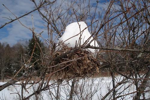 Snowy Nest