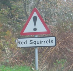 caution_squirrels
