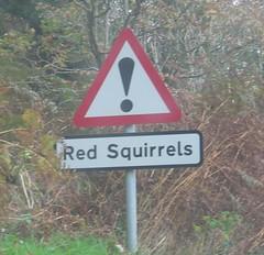 caution_squirrels