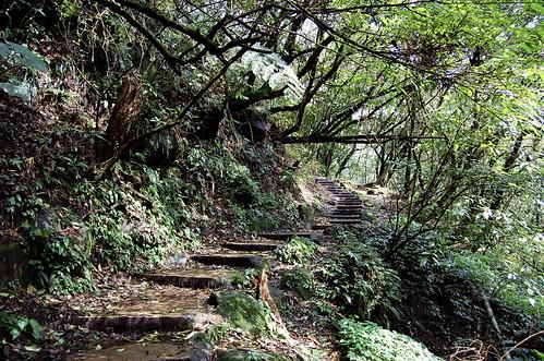 Green Green Trail