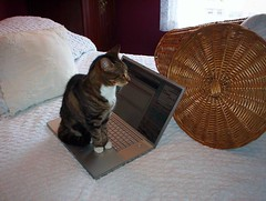 Blogging for Cats