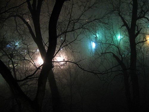 Foggy Night, Bright Lights in Trees 2