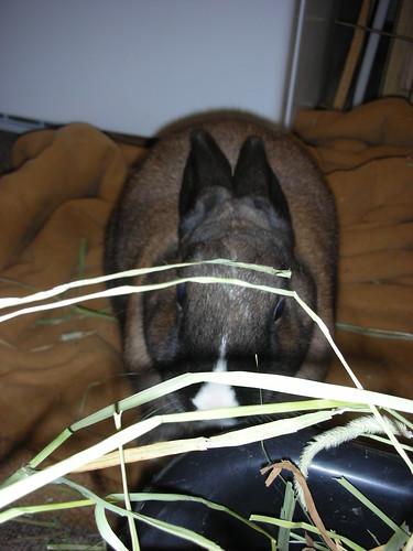 Fiona peeking through the hay