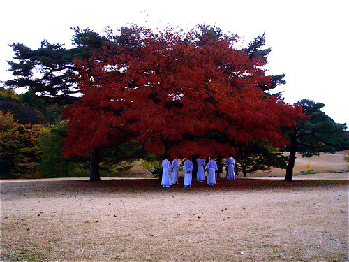 a herd of priests grazing under the maple