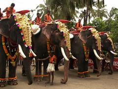 A Kerala Festival