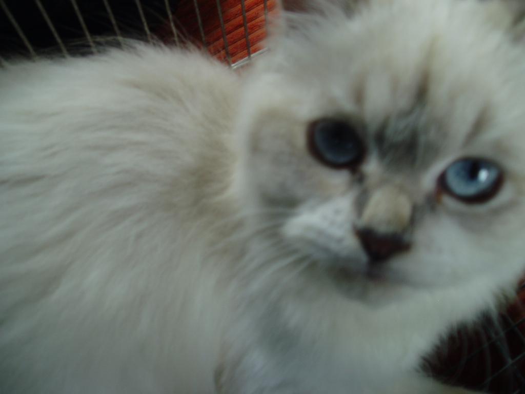 Miel The Cat
