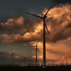 wind farm near Magdeburg