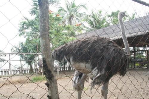 Island Cove Zoo