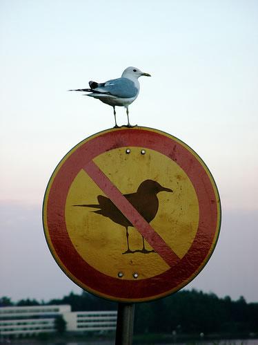 birdonnobirdsign.jpg