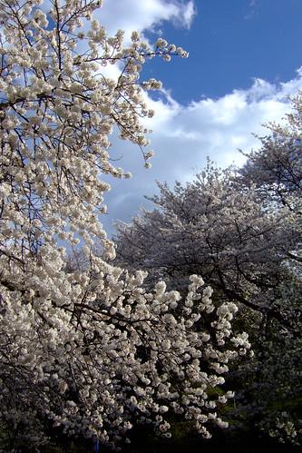 Blending branches