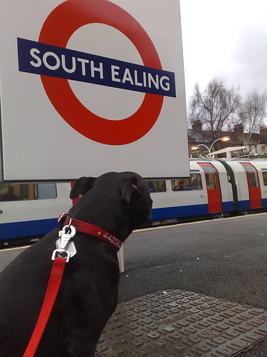 Matilda at South Ealing