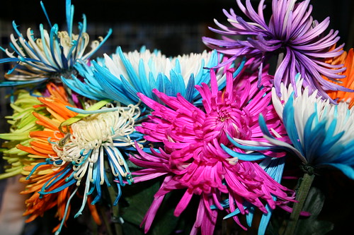 Colorful Spider mums