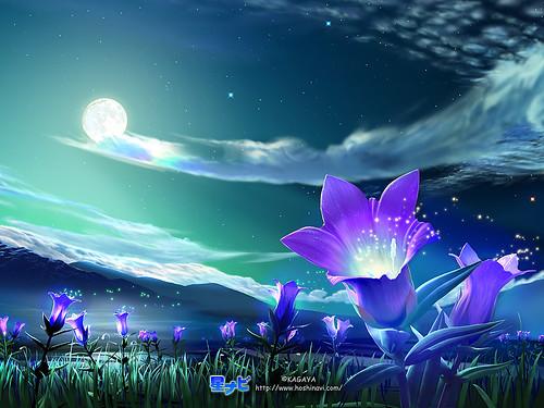 www.MyspaceDogDog.com - night with beautiful sky flowe by myspacedogdog.