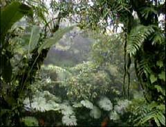 forest_s_elena_foggy_monteverde