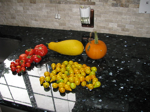 May 20th--54 yellow, 12 cherry, 5 large, squash & pumpkin
