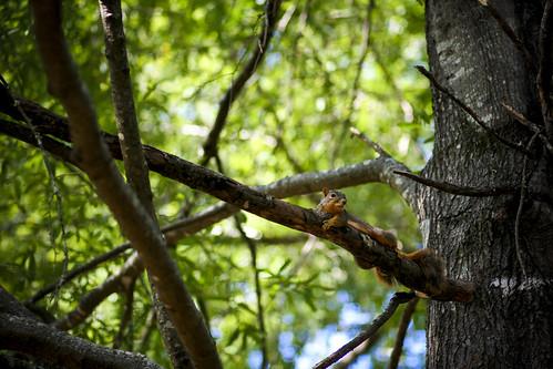 Squirrel Pic #2
