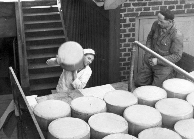 Making cheese 1951