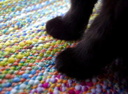 Kitty paws in love