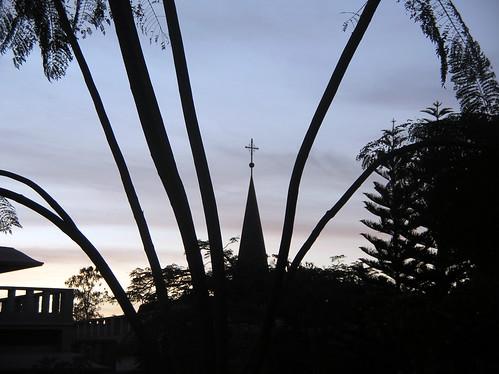 CrossAmongTrees