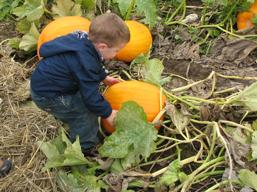 Jacob in the Pumpkin patch