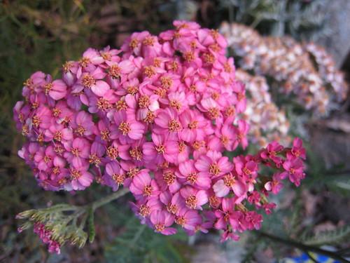 Pictures from Anna Lisa's garden in Orinda