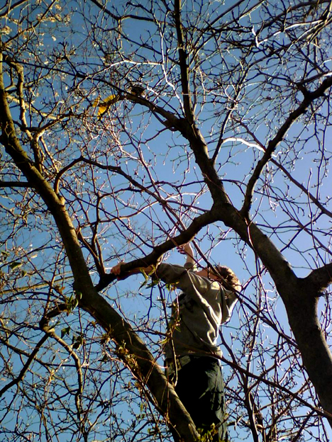 Shane in a Tree