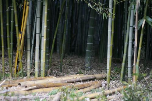 Shooting bamboo
