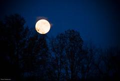 Moon-3703.jpg