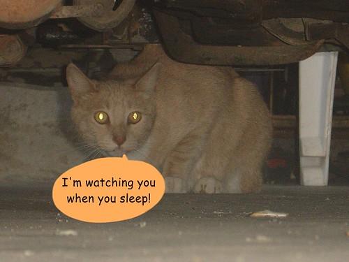 I'm watching you when you...