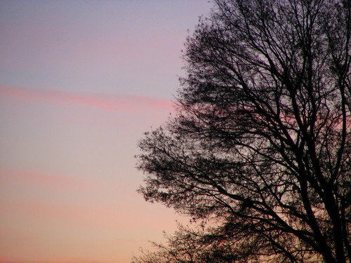 Sunset & Tree Silhouette