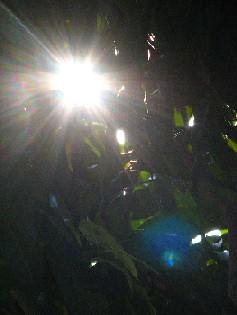 Leaves_Sun_Ivans_20071010_06x