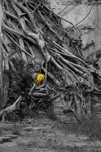Buddha Banyan Wall