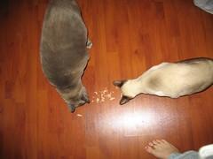 Mamma give me Tuna!!!! 003