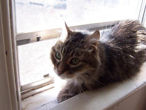 Mitty in the Window