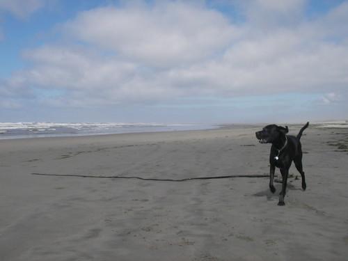 A seaweed huntin' dog