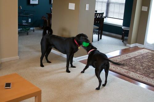 Clifford, the big black? dog...