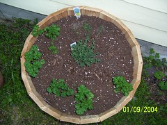 Whiskey Barrel of Herbs