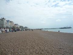 Brighton (64)