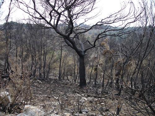Incendio Oropesa