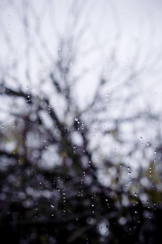 rainyday2 copy