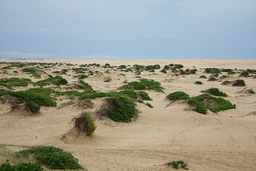 Stockton Beach Sand Dunes