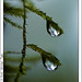 Waterdrops - Tropfen