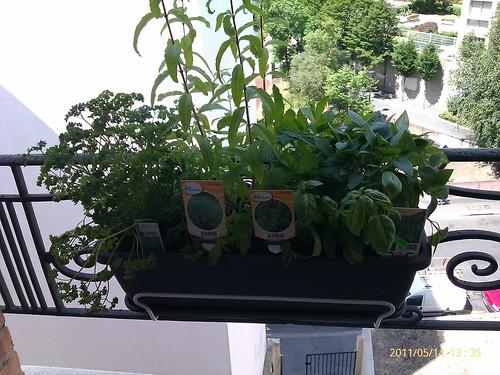 Mon jardin potager 2 我的香草花園 2