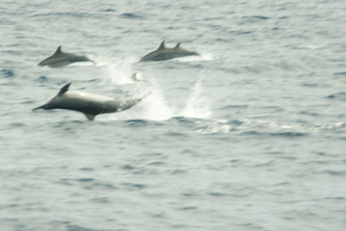 So why do they call them Spinner Dolphins?