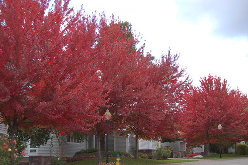Fall Colour in Medford OR