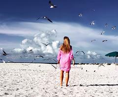 seagulls by _Paula AnDDrade