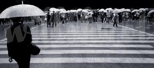 Rainy Shibuya