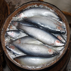 barrel of fish