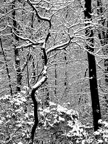snow textures